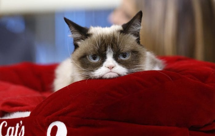 Grumpy Cat Shows Her Claws in $700,000 Copyright Lawsuit