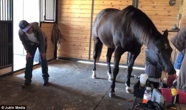 Horse does yoga with owner