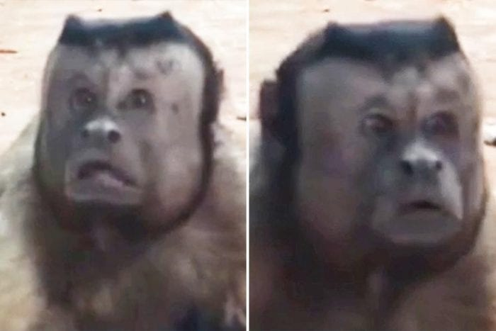 Monkey with a human face