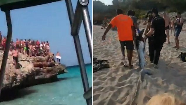Panicked tourists flee Majorcan beach after huge shark is spotted swimming just feet from children in pedalos