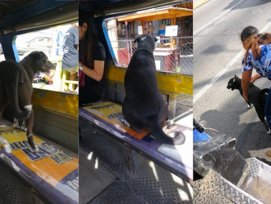 Dog Riding Bus By Himself To Follow Owner