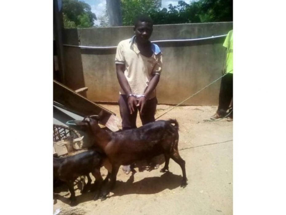 Man arrested for having sex with a goat