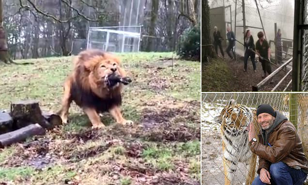 Brit zoo sparks outrage for letting children as young as eight play tug of war with lion and tiger in 'human vs beast challenge'