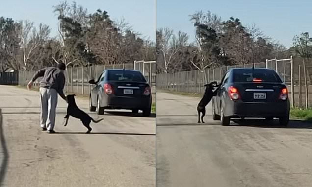 Dog Desperately Chases After Owner's Car After Being Dumped At Lake
