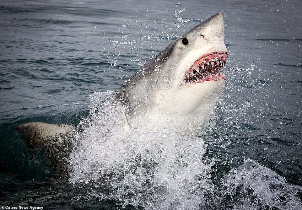 Monterey photographer takes incredible snap of great white shark inches from his camera