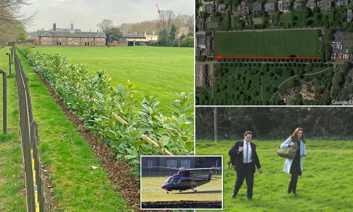 Kensington Palace spends £15,000 extending massive 950ft-long hedge 'to block the public from watching royals flying in and out by helicopter'