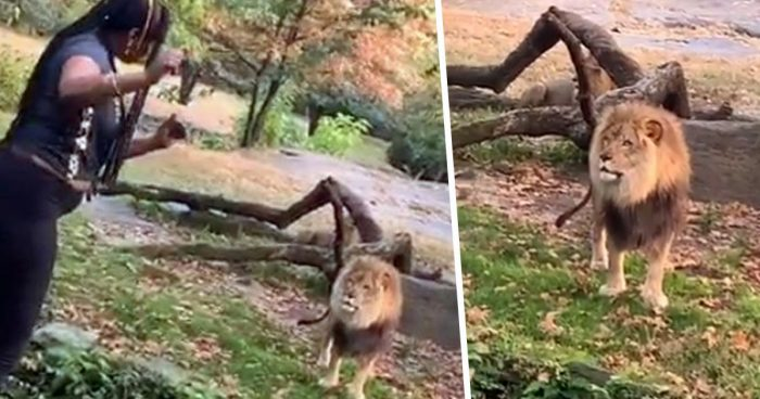 Woman dances, taunts lion after climbing into zoo exhibit