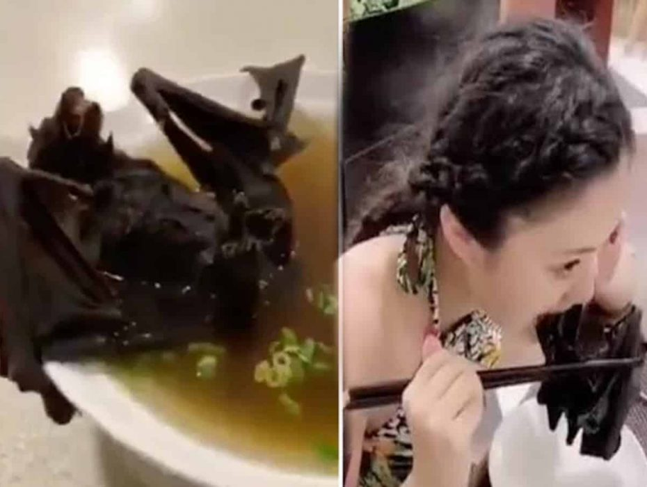 Experts think 'Chinese virus' linked to bat soup